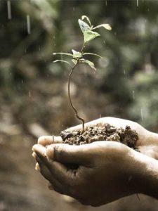 plant hand duurzaam